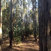 treess